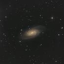 NGC2903 Galaxy,                                Sascha Schueller