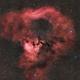 NGC 7822,                                Paul Schuberth