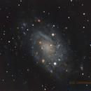 NGC 2403,                                David Newbury
