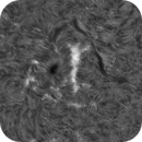AR 2833 animation with penumbral waves (large file 88 mb),                                Alan