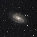 M81,                                Dan West