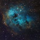 IC410  the tadpole nebula,                                rayp