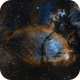 The Fish Head Nebula (IC 1795) in SHO,                                Alex Roberts