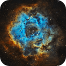 The Rosette Nebula in SHO,                                Tommy Lease