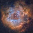 the Rosette nebula,                                Steve Coates