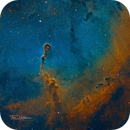IC1396 - Elephant Trunk,                                Tim Hutchison