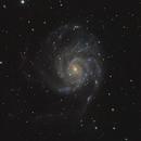 The Pinwheel Galaxy - M101,                                Angelo F. Gambino