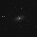 NGC3953,                                Pawel Turek