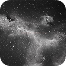 Seagull in HA Narrowband,                                Vincent Lupo