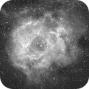 Rosette Nebula  NGC 2244,                                Peter Webster