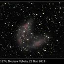 Sh2-274, Medusa Nebula, 22 Mar 2014,                                David Dearden