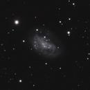 NGC 2552,                                Gary Imm