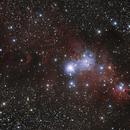 NGC2264 - xmas tree,                                juba