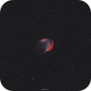 The Medusa Nebula - Abell 21,                                Henrique Silva