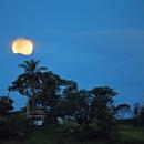 And the Moon Came Up...,                                Odilon Simões Corrêa