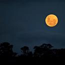 Golden Moon,                                Odilon Simões Corrêa