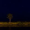 El cazador y el árbol solitario,                                gale88