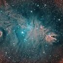 Cone nebula and Christmas Tree cluster,                                John Sim