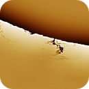 Solar prominence 20170329,                                Sergio Alessandrelli