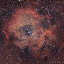 The Rosette Nebula - Caldwell 49,                                Paul Hutchinson