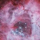 Rosettennebel (NGC 2237),                                Mike Behnke