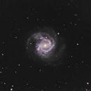 M61 and Supernova 2020jfo,                                Kevin Parker