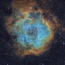 Rosette Nebula SHO Hubble Palette (Sh2-275),                                Brandon Tackett