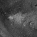 NGC 2264 Cone Nebula and Christmas Tree Cluster H-Alpha,                                Mario Gromke