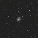 NGC 7479,                                Brice