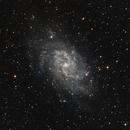 Triangulum Galaxy With LPS-D1 Filter,                                Pat Darmody