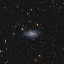NGC 2336,                                Roberto Marinoni