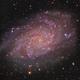 The Triangulum Galaxy,                                Gabe Shaughnessy