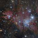 Cone Nebula and Christmas Tree Cluster,                                drgomer