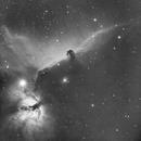 Horsehead Nebula (Barnard 33) - H7nm,                                T L Samuels