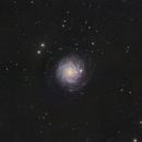 NGC3344 Face On Spiral Galaxy,                                niteman1946