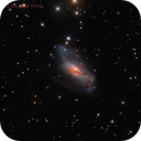 NGC 2146 The Starburst Galaxy,                                Mike Miller