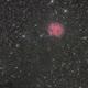 Cocoon Nebula,                                Bernd Steiner
