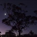 The Moon, Venus and Jupiter Tree,                                Geoff Scott