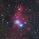 NGC2264 Christmas Tree Nebula,                                Frank Chen