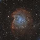 NEBULEUSE DE LA TETE DE SINGE  (NGC2175),                                CAMMILLERI JEAN OLIVIER