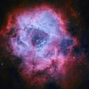 Rosette Nebula NGC2238 / NGC2244,                                Aaron Lovett