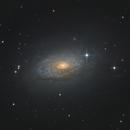 "Galaxy Season 2021 - ""Sunflower Galaxy"",                                Michael S."