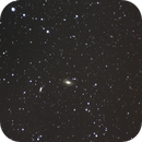M81 and 82,                                Shan Rimmey