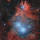 Cúmulo Árbol Navideño (NGC 2264),                                Aniceto Porcel