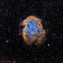 NGC 2175 The Monkey Head Nebula,                                Greg Nelson