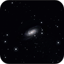 Barred Spiral Galaxy NGC 2903 in the Constellation Leo,                                Tom Wildoner