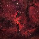 Elephant Trunk Nebula IC 1396,                                AmyAstro