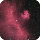IC 2177 - The Seagull Nebula,                                Hap Griffin