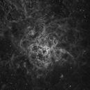 NGC 2070 - The Tarantula Nebula (Ha),                                Insight Observatory