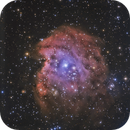 NEBULEUSE DE LA TETE DE SINGE  (NGC2175) mieux,                                CAMMILLERI JEAN OLIVIER